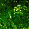 Il mondo vegetale dei Simbruini