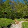 Subiaco: Faggeta sul Monte Autore (mt 1855)