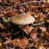 Monti Simbruini, Nel sottobosco delle faggete crescono molte varietà di funghi