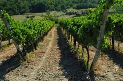 I vigneti del vino cesanese di Affile nell'alta Val d'Aniene