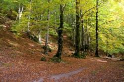 Fiumata, il sentiero che costeggia il Torrente Rogliuso (Filettino)