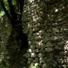 Cervara di Roma, la natura si riapproria dei propri spazi