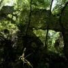 Cervara di Roma, I resti della porta di accesso alla rocca