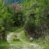 Cineto Romano, Percorso Naturalistico Madonna del Lago