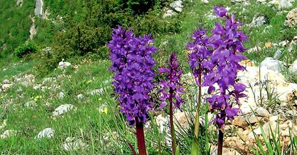 orchidee-vallepietra-1